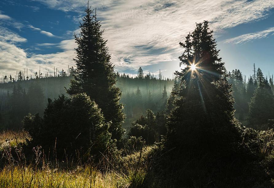 Gasthof Genosko, Spiegelau, Bayerischer Wald, Waldgebiet Lusen