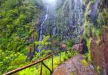 Hotel Estrelícia in Funchal, Levada Wanderung