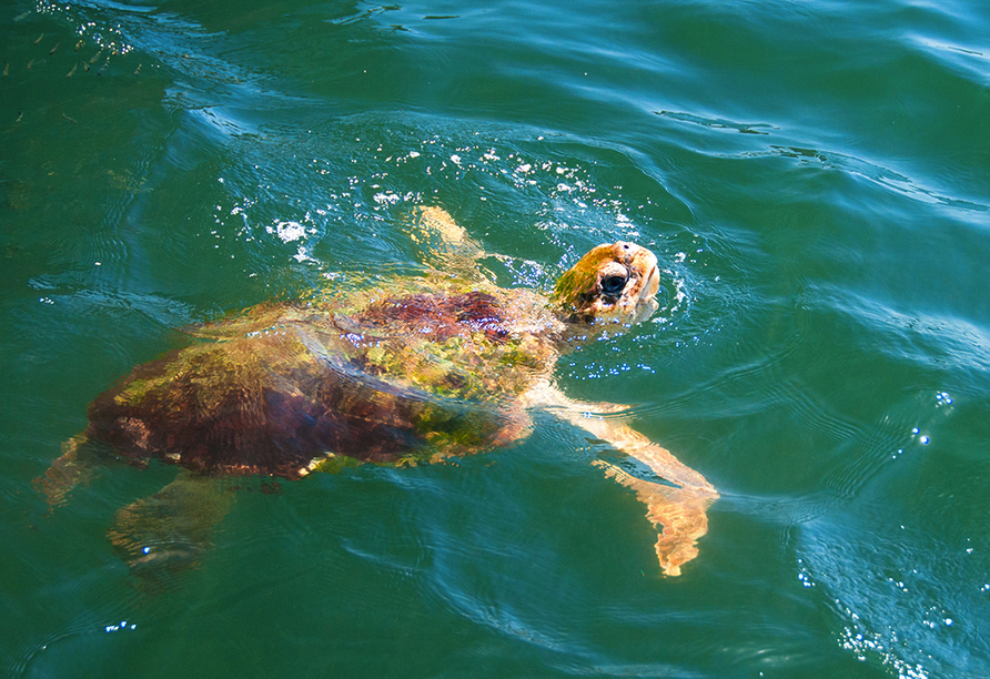 Lykien & Türkische Riviera, Schildkröte