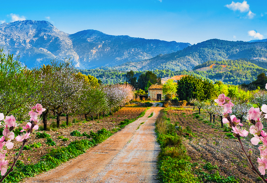 Frühling auf Mallorca, Tramuntanagebirge