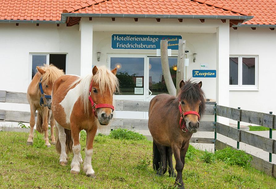 Hotelferienanlage Friedrichsbrunn, Pferdehof