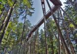 Hotel Gottinger in Waldkirchen, Bayerischer Wald, Baumwipfelweg durch Wald