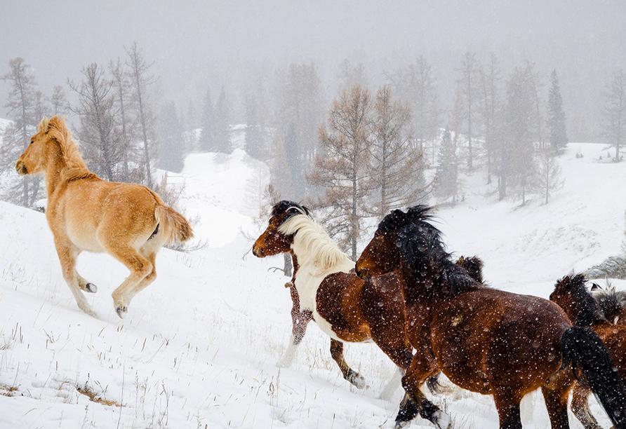 Reiterhof Runding, Schnee Pferde