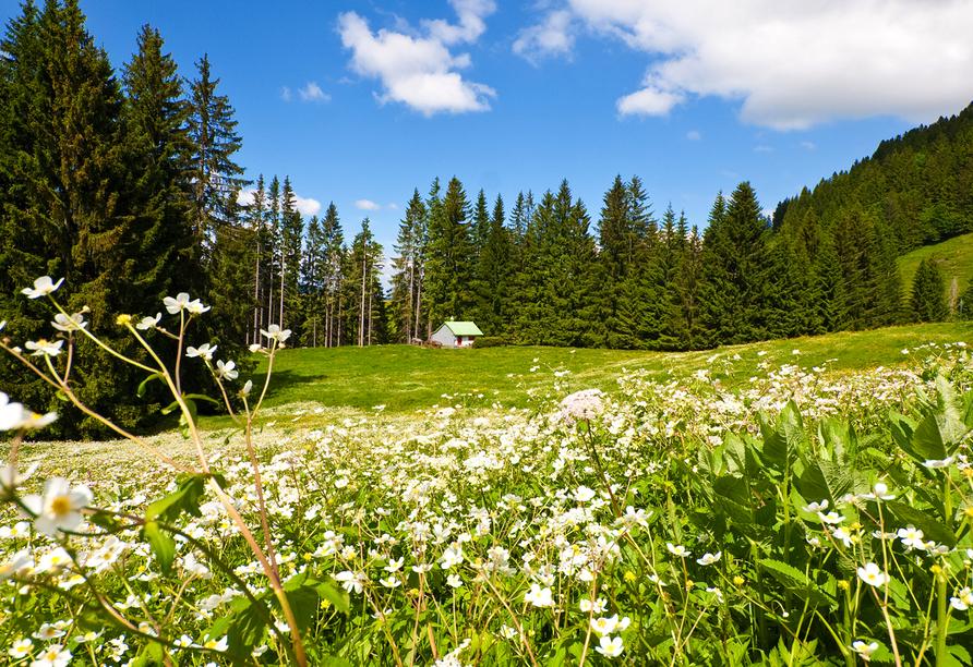 Ferienhotel Riesberghof in Lindberg, Natur