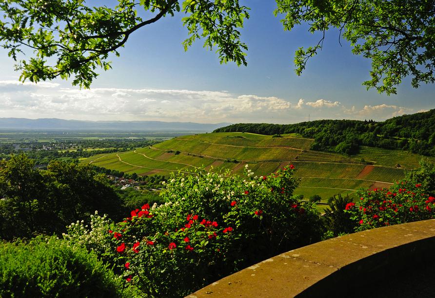 Fini-Resort Badenweiler, Vogesenblick