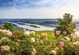 DCS Alemannia, Rüdesheim am Rhein