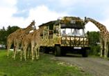 Michel & Friends Hotel Lüneburger Heide, Serengeti-Park