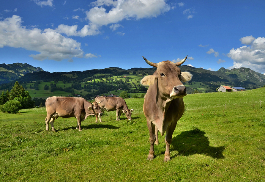 Bio-Pension Vorderlengau, Kühe auf der Weide