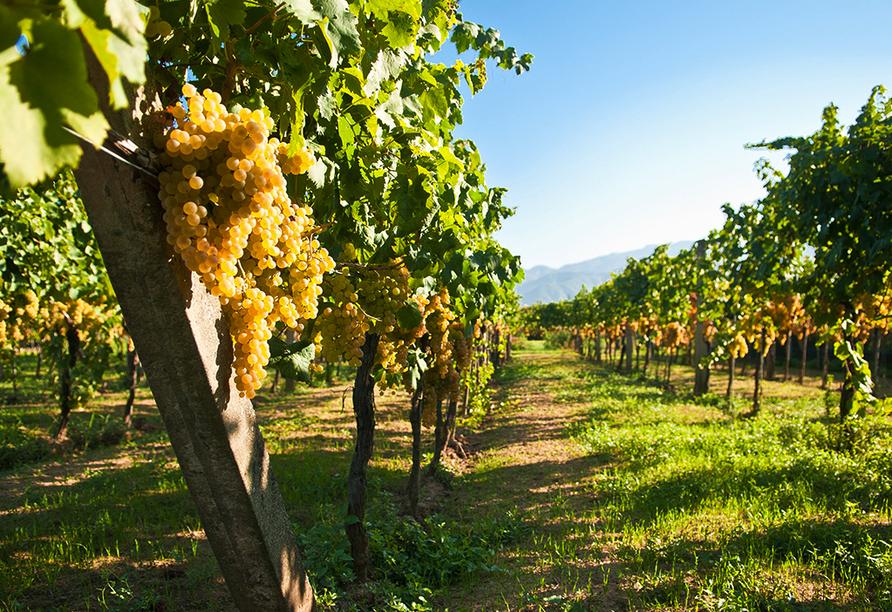 MS Douro Cruiser, Wein