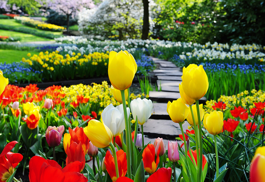 Hollands Tulpenblüte erleben, Tulpen Keukenhof
