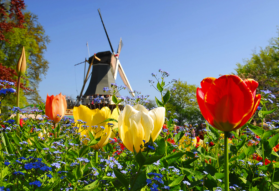 Hollands Tulpenblüte erleben, Keukenhof