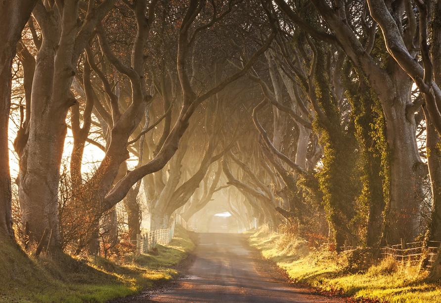 Rundreise Nordirland, The Dark Hedges