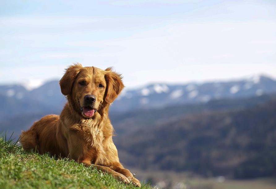 Bergresort Seefeld, Hund