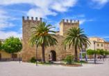 Frühling auf Mallorca, Alcudia