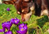 Sporthotel Malchow, Hund und Blumen