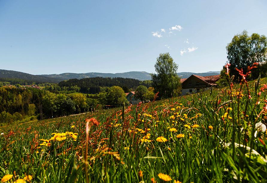 Panoramahotel Schwarzeck in Lohberg, Landschaft