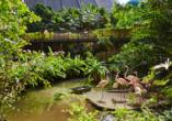 Tropical Islands Resort, Mangroove