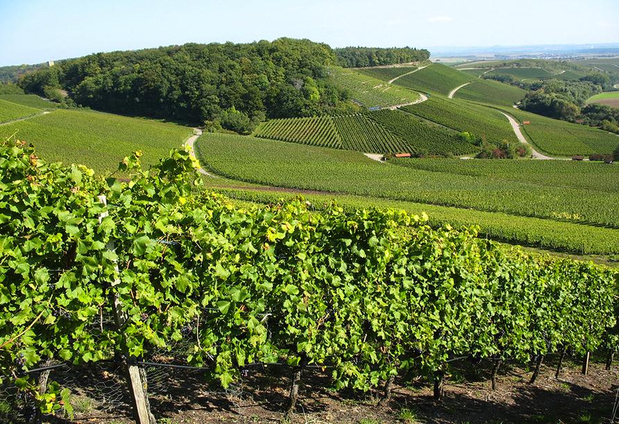Weinanbau im Stromberg