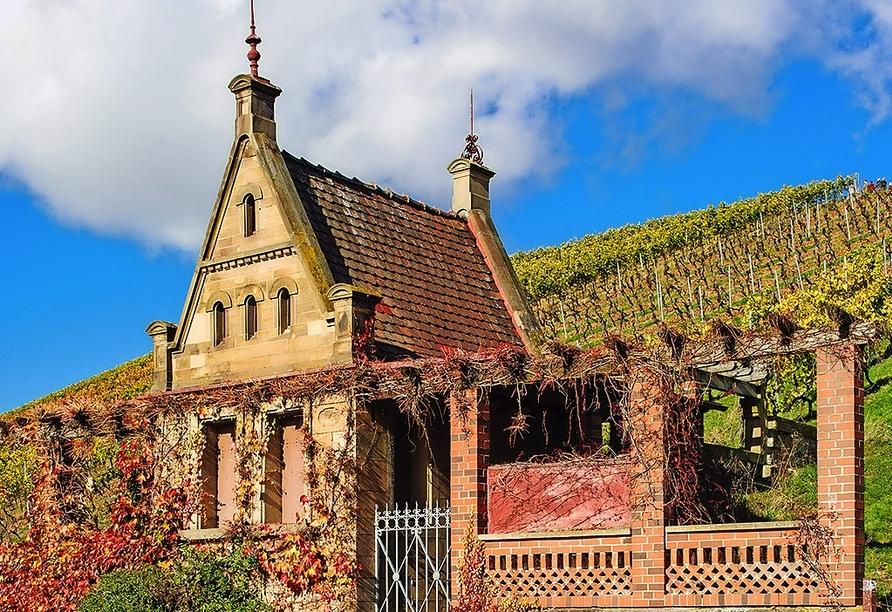 Heilbronn, die älteste Weinstadt Württembergs, ist eine Stadt für Genießer.