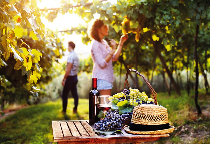 Bötzingen ist eine der ältesten Weinbaugemeinden Badens.