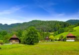 Erwandern Sie die traumhaften Naturlandschaften des Schwarzwalds.