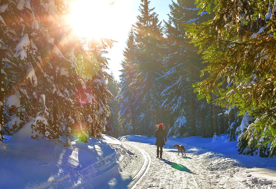Frau geht mit Hund in Winterwald spazieren.