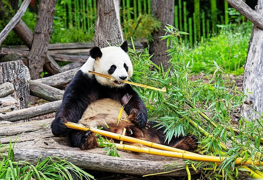 Der Berliner Zoo ist der älteste noch bestehende Zoo Deutschlands – er liegt nur ca. 3 km von Ihrem Hotel entfernt.