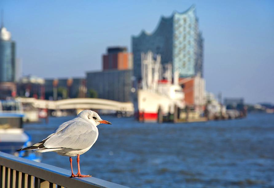 Möwe im Hafen von Hamburg.