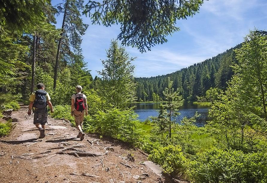 Bewandern Sie die traumhaften Pfade des Schwarzwaldes!