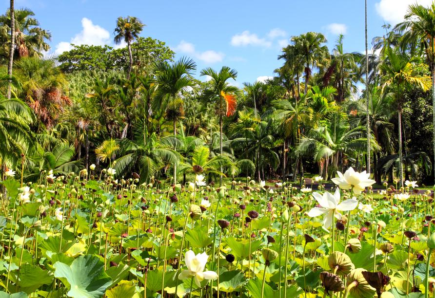 Der Botanische Garten in Pamplemousses bietet eine prächtige Pflanzenwelt.
