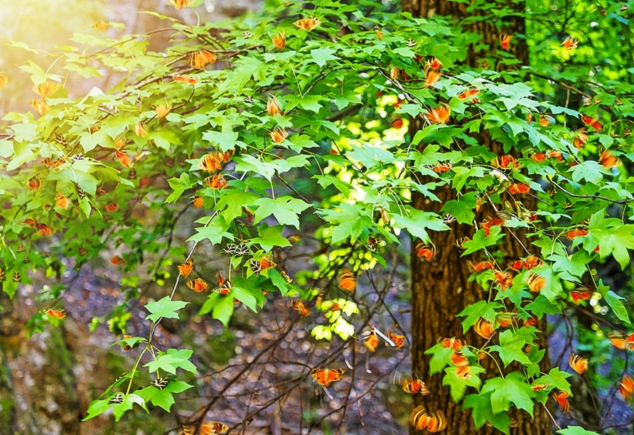 Im Tal der Schmetterlinge können Sie tausende Schmetterlinge der Art