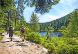 Entdecken Sie die schönsten Wanderwege im Schwarzwald!