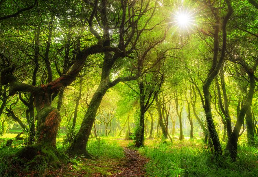 Der wunderschöne Laurenzwald gehört zum Weltnaturerbe der UNESCO.