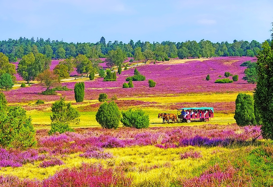 Genießen Sie Ihren Urlaub in der Lüneburger Heide – unternehmen Sie doch mal eine Planwagenfahrt durch die Heide.