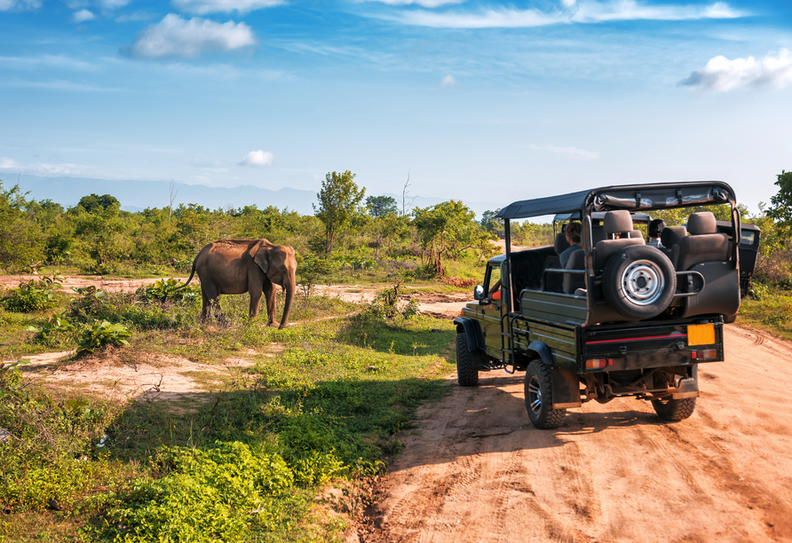 Freuen Sie sich auf spannende Eindrücke während der Jeep-Safari im Udawalawe Nationalpark.